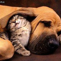 Кошки и собаки дружат! фото приколы