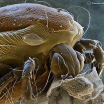 Фото при помощи электронного микроскопа фото