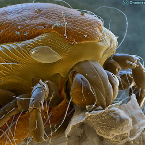 Фото при помощи электронного микроскопа