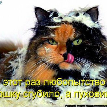 Котейки из котоматрицы