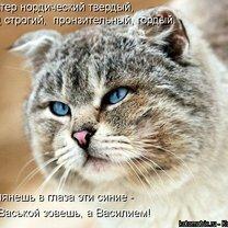 Апрельская котоматрица