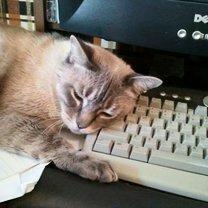 Кошки проказничают смешных фото приколов