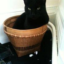Кошки проказничают фото приколы