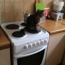 Уютное местечко для кошки фото приколы