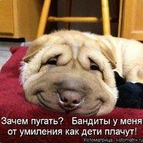 Юморная котоматрица смешных фото приколов