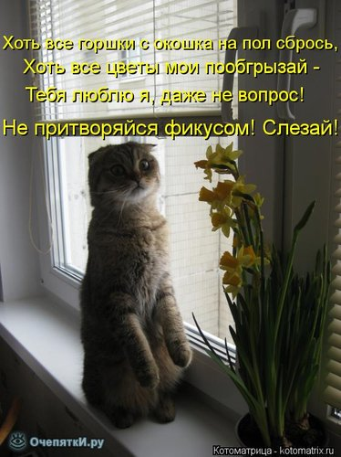 Забавы из котоматрицы 7