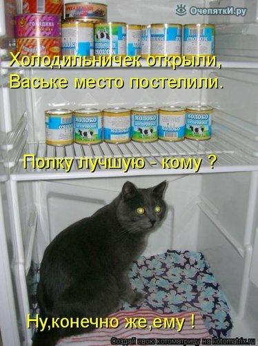 Забавы из котоматрицы 24