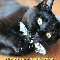 Забавы из котоматрицы смешных фото приколов