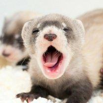 Прикольные животные смешных фото приколов