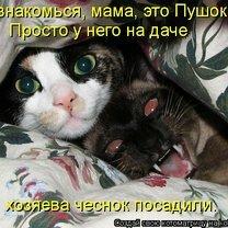 Смешные кошки в котоматрице