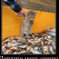 Достоверные демотиваторы смешных фото приколов