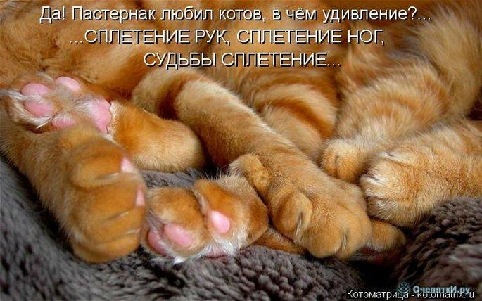 Прикольная котоматрица 4