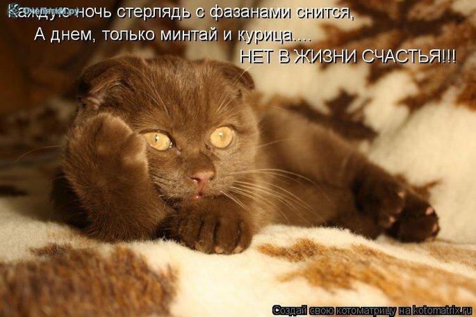 Прикольная котоматрица 5