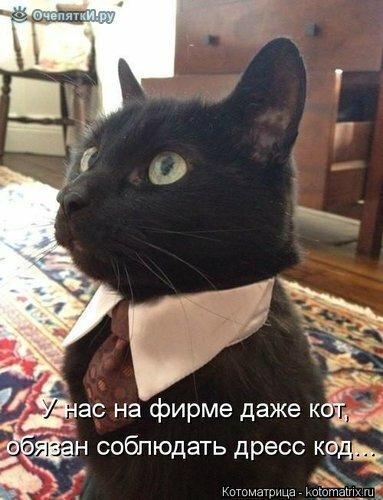 Прикольная котоматрица 6