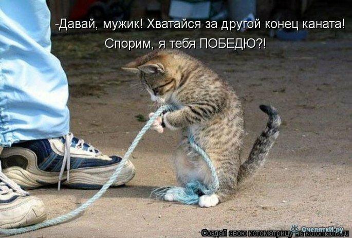 Прикольная котоматрица 7