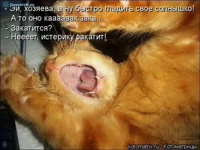 Прикольная котоматрица 9