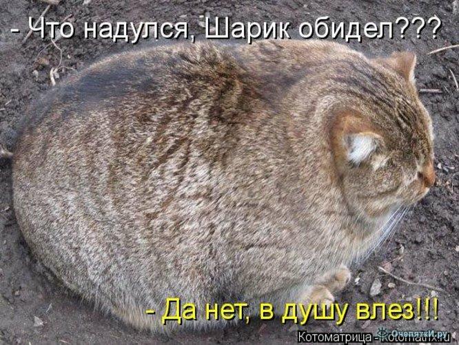 Прикольная котоматрица 10
