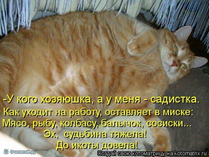 Прикольная котоматрица 11