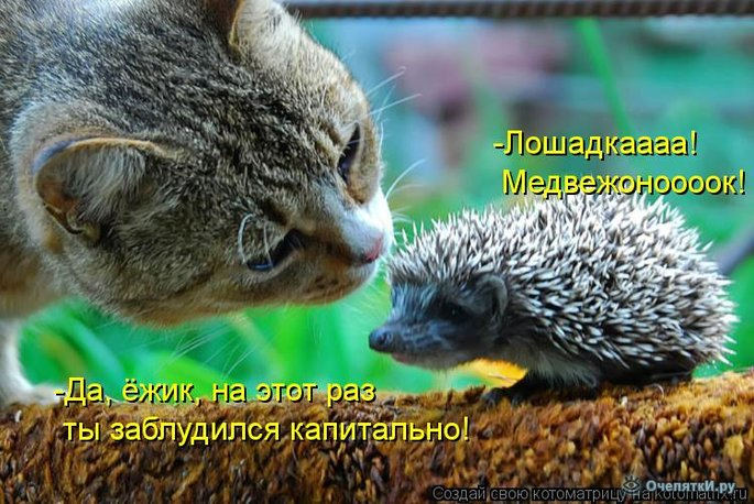 Прикольная котоматрица 12