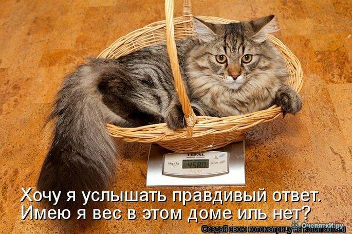 Прикольная котоматрица 15