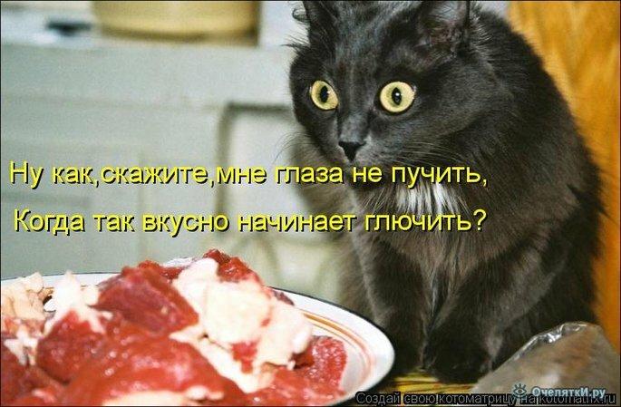 Прикольная котоматрица 16
