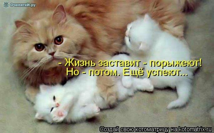 Прикольная котоматрица 17