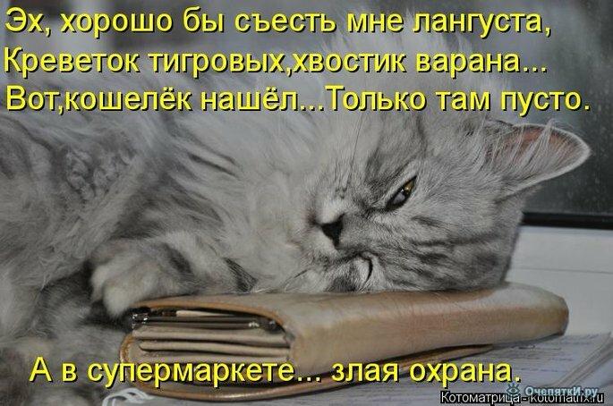 Прикольная котоматрица 20