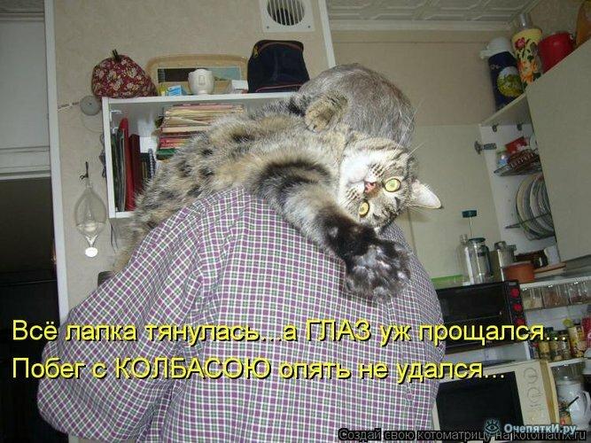 Прикольная котоматрица 22