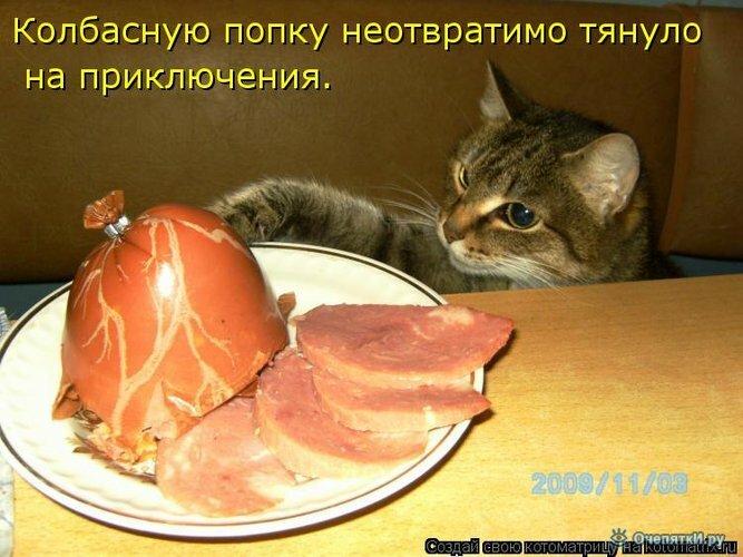 Прикольная котоматрица 27