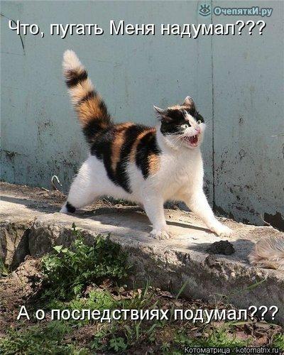 Прикольная котоматрица 31