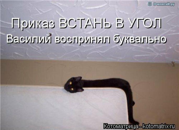 Прикольная котоматрица 33