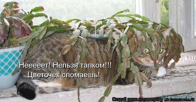 Прикольная котоматрица 34