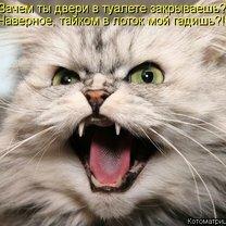 Прикольная котоматрица смешных фото приколов