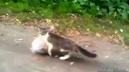 Смотреть Кот идёт из магазина