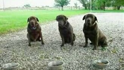 Смотреть Собачье терпение