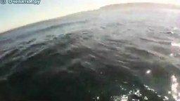 Смотреть Встреча на байдарке с китом