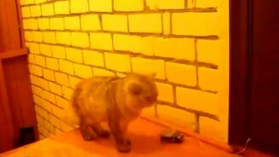 Смотреть Умный кот-звонок