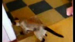 Укуренный котяра смотреть видео прикол - 0:54