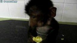 Маленький бабуин смотреть видео прикол - 0:57