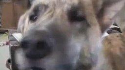 Говорящий пёс смотреть видео прикол - 1:06