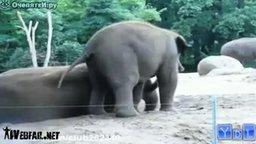 Смотреть Прикольные животные