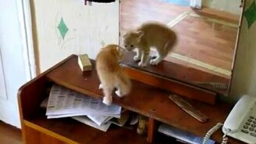 Смотреть Котёнок и отражение