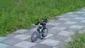 Робот-велосипедист смотреть видео - 4:19
