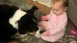 Смотреть Малыш кормит пса