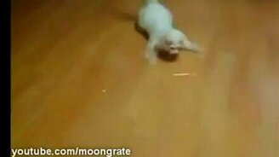 Молниеносный котяра смотреть видео прикол - 0:35