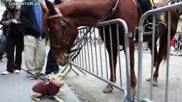 Очарованный лошадью смотреть видео прикол - 2:11