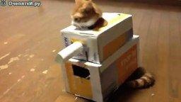 Смотреть Кот в танке