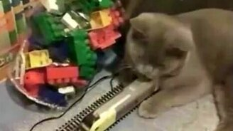 Равнодушный котяра смотреть видео прикол - 1:23
