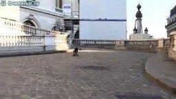 Смотреть Ловкий пёс на скейте