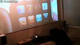 Смотреть Мопс ненавидит айфоны